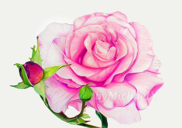 Drawing Rose color pencil by byMichaelX.deviantart.com on @deviantART