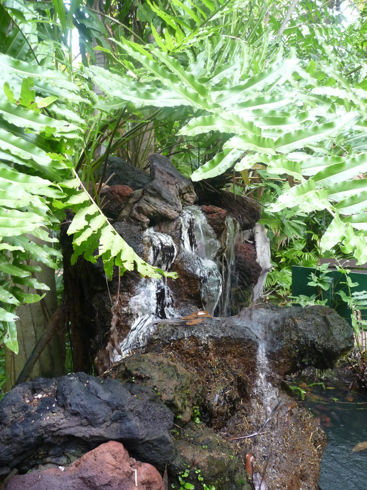 1000 Images About Sarasota On Pinterest Jungle Gardens