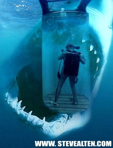 World's Biggest Shark | Photography Blog