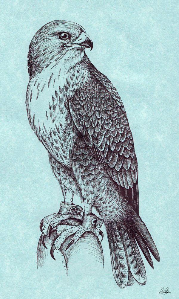 Peregrine Falcon by Grwobert.deviantart.com on @deviantART