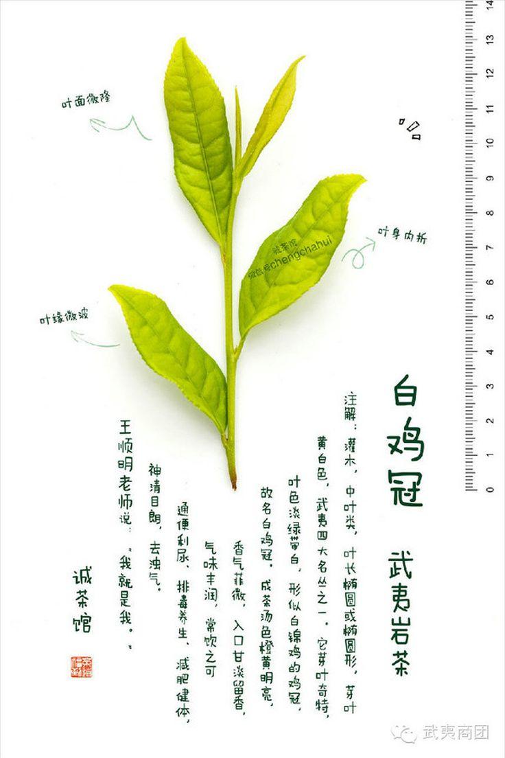 #白鸡冠 #武夷岩茶 #乌龙茶