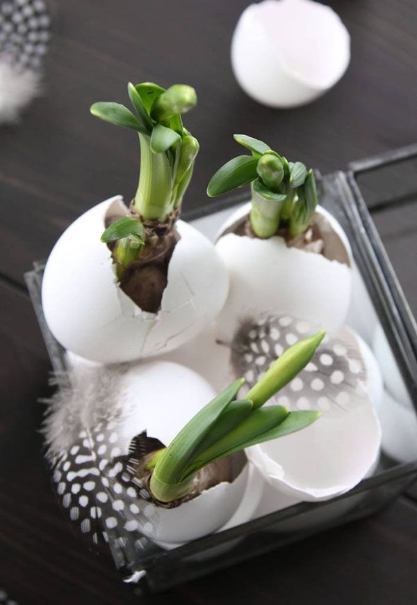 Paasdecoratie: bloembollen in een lege eierschaal