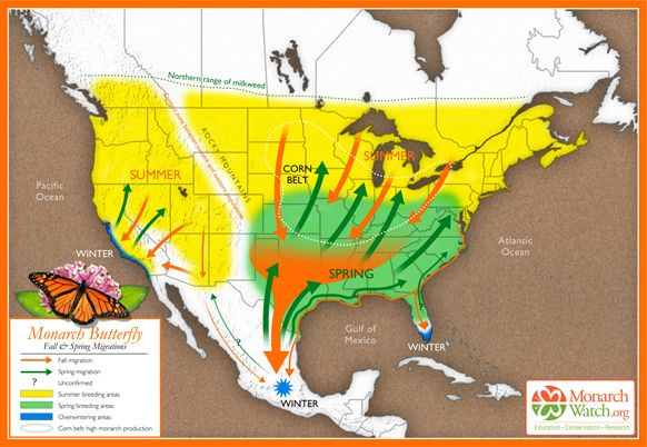 Amazing Map of Monarch butterfly migration routes, what a creature!