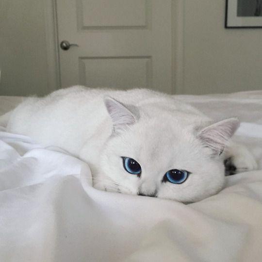 Un gato hermoso!!!