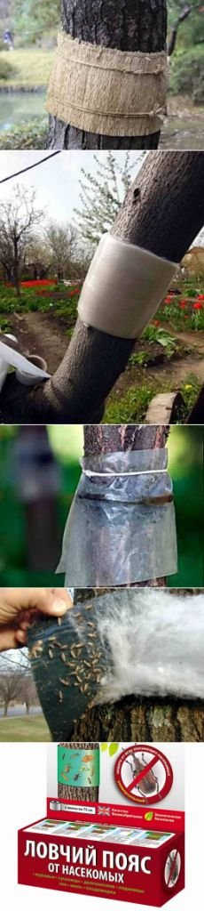 Способы сделать ловчие пояса своими руками, фото   Дача - впрок