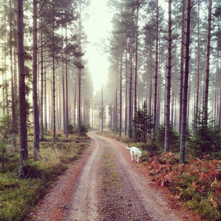 Morgonrusning i Storskogen