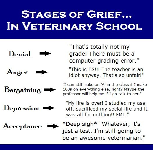 Stages of grief in veterinary school... love it lol :-)