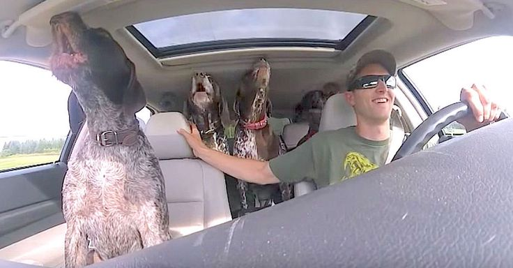 4 Dogs Flip Out When They Hear They're Going To The Park ~ You're about to find out what happens when you tell four big, energetic dogs they're on their way to play at the park… and trust me, it's awesome to watch.