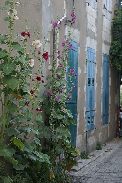 hollyhocks and blue windows, St. Martin de Ile de Ré, France by Ingrid Jansen