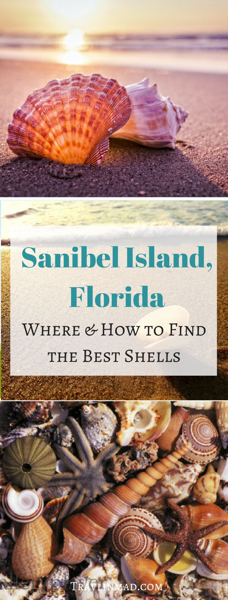 USA - Sanibel Island beaches are teeming with gorgeous seashells, but where can you find the best beaches on Sanibel for shelling? Here's your ultimate guide to Sanibel shelling:the how, when, and where to find the best shells. | Best Shelling Beaches, Sanibel shells, Sanibel Island, Captiva Island, Florida, #shelling #Sanibelshelling #Floridashelling