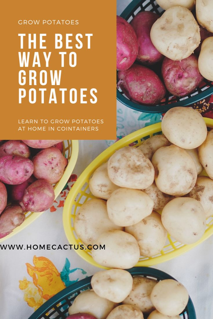 The Best Way To Grow Potatoes In Containers In 2020 400 x 300