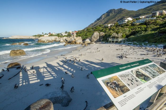 Boulders Beach Viewing Platform