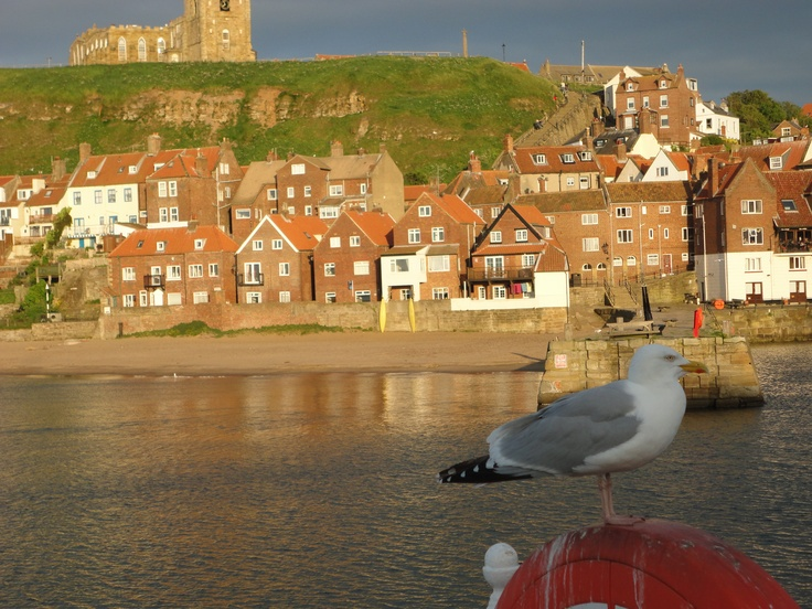 Whitby England....loved that seagull