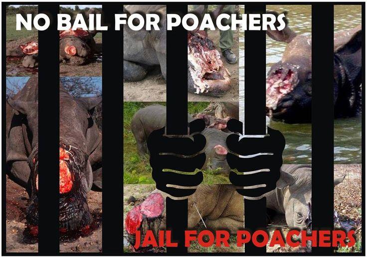 no mercy for poachers