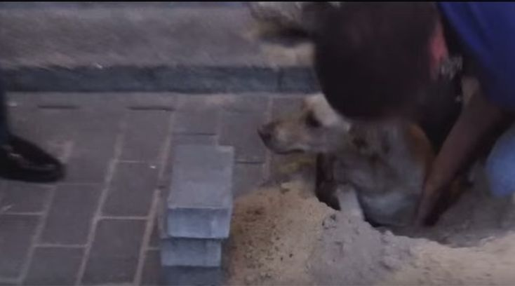 Pregnant Dog Rescued After Two Days Buried Alive  |  After finding a pregnant dog trapped under dirt and rubble from a collapsed apartment block in Russia, she was rescued by two good Samaritans. Read more...