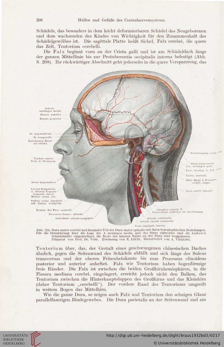 354 best corpus humani images on Pinterest | Human body, The human ...