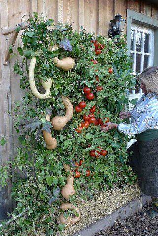 Huerto vertical: Modern Gardens, Gardens Ideas, Patio Gardens, Gardens Trellis, Vertical Gardens, Vegetables Gardens, Small Spaces, Veggies Gardens, Gardens Tips