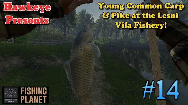 Fishing 14 S3 Young Common Carp & Pike at