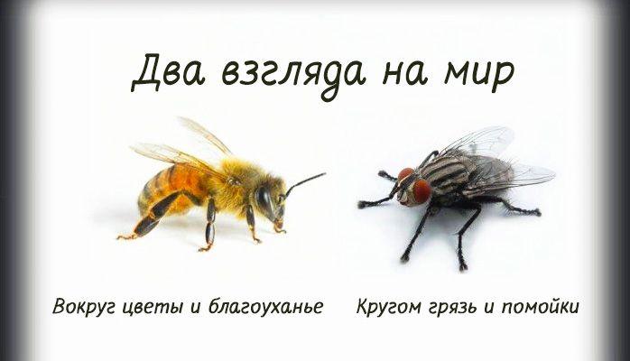 Два взгляда на жизнь (пчела и муха)