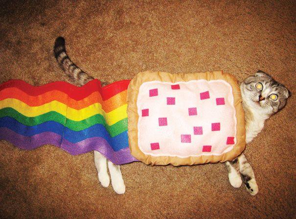 deguisements halloween pour animaux nyan cat   Déguisements Halloween pour animaux   tortue Starwars python photo oie Miley Cyrus lézard Ind...