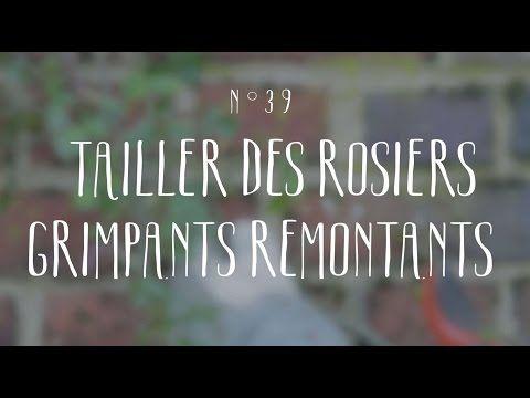 Las 25 mejores ideas sobre taille rosier grimpant en pinterest taille des rosiers grimpants - Periode de taille des rosiers ...