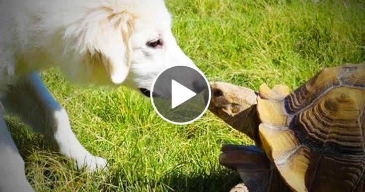 Cute Tortoise  Funny and Cute Tortoise (Full) [Funny Pets]
