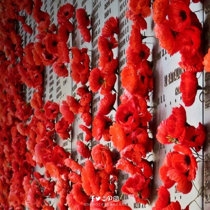 Red poppies line the Wall of Honour at the Australian War Memorial in Canberra  #Canberra #AustralianWarMemorial #lestweforget #remembranceday #remembranceday2017 #1111 #111111