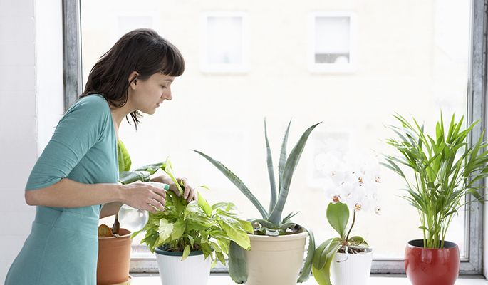 How Does One Grow Beautiful Plants Indoors at Home - iHidroUSA.com - Blog News - #Hydroponics #indoor #gardening #growing #plants #hydro #accessories #beautifulplants