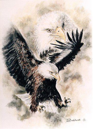 Bald Eagle limited Edition 35 euro