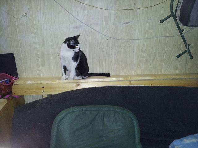 Board + industrial-strength velcro = futon kitty shelf!