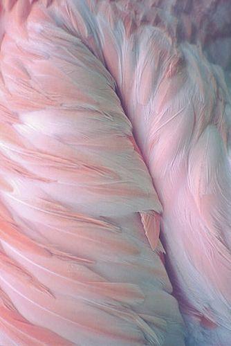 Blue & Pink, Feather, Texture, Pantone Color(s) of 2016, Rose Quartz & Serenity, h-a-l-e.com