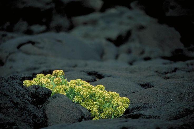 Ilha do Pico - O quotidiano em fotografia