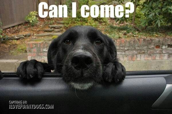 Can I come with you?  Unless we're going to the vet, which in that case, then I'll stay home.