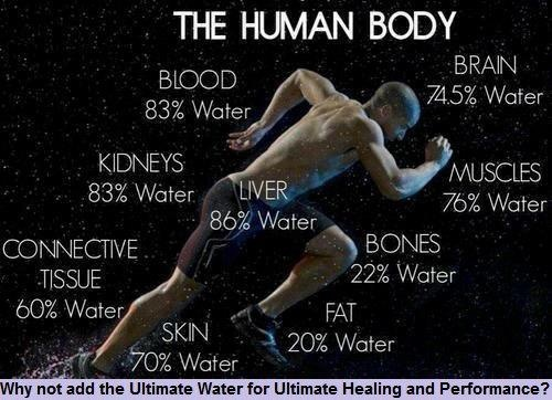 the benefits of aquatic exercise on the human body ©aquatic exercise association revised 02-03-18 1 aea aquatic fitness professional learning objectives  recognize the structural organization of the human body.