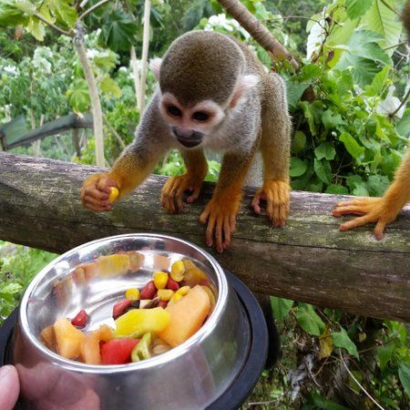 You can feed the monkeys, no cages!! Monkey land Punta Cana