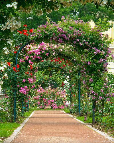 Best 25 le jardin des plantes ideas on pinterest le for Jardin plante