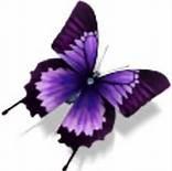 purple butterflies - Bing Images
