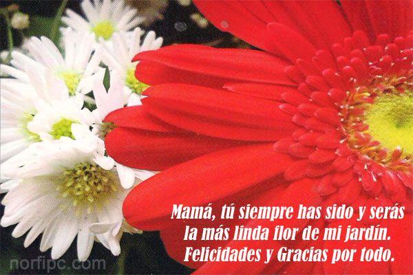 Mamá, tú siempre has sido y serás la más linda flor de mi jardín. Felicidades y Gracias por todo tu amor.