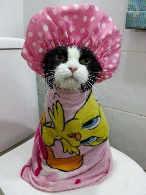 TOP 32 Cats Pictures | Funny Cat | DomPict.com