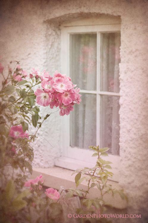 looking outside my art studio - I wish :)