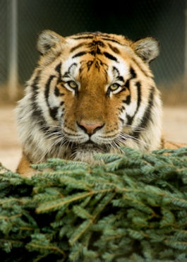 Photography Tours at The Conservator's Center in NC... on my wishlist!: Big Cat, Camera Cakes, Photo Magic, Conservator Center, Travel Bugs, Photography Tours, Bugs Bit
