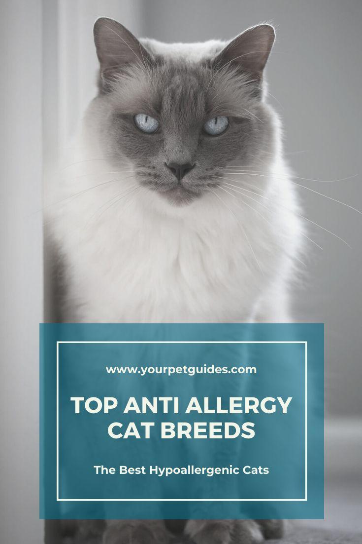 Anti Allergy Cat Breeds In 2020 Hypoallergenic Cats Cat Breeds Hypoallergenic Cat Breeds