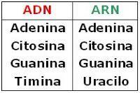 CIENCIAS BIOLOGICAS: ACIDOS NUCLEICOS