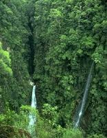 rainforest pictures - Google Search