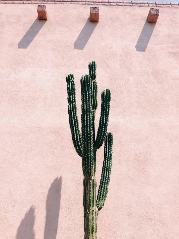 Cactus voor pastel roze muur. Het ultieme tropische urban jungle gevoel! // via AlexandAlexa