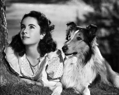 Lassie and Elizabeth Taylor, 12 yrs old.Classic Movie, Dogs, Elizabeth Taylors, Classic Lady, 1940S Movie, Movie Stars, Collies, People, Liz Taylors