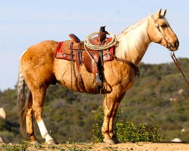 Beautiful Ranch/team Roping and show horses for sale