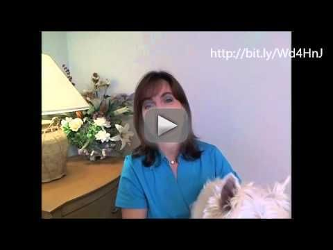 """How To Train Your Dog - 6 Important Dog Training Tips For Obedience for FREE!!! - Visit   This video teaches you """"how to train your dog"""" """"how to train a puppy"""" and other """"dog training"""" tips and tricks. dog training how to train your dog how to train a dog dog training tips how to train a puppy training your dog train your dog training a dog obedience training for dogs how to train dog train dog how to train your puppy how to train dogs dog obedience training train a dog training dog how to…"""