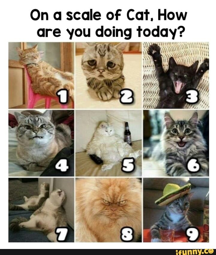On A Scale Of Cat How Are You Doing Today Ifunny In 2020 Cute Memes Feels Meme Funny Animal Memes