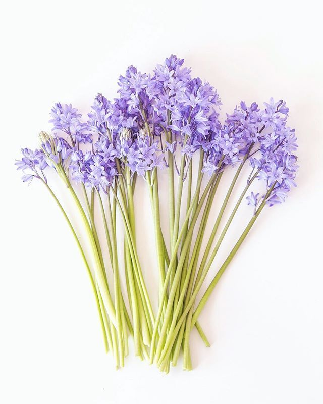Flatlay Of Bluebells On A White Background Simple And Minimal Spring Photo By Zoe Power Zoepower On Inst White Background Photography Bluebells Spring Photos